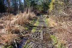 Тинная тропа в предыдущей весне стоковые изображения rf