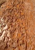 тинная тропка Стоковая Фотография RF
