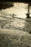 Тинные поля Стоковое Изображение