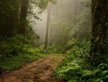 Тинный путь внутри туманный лес Стоковое Изображение RF