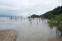 Тинный пляж моря Стоковые Изображения RF