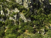 типичная ландшафта Франции южная Стоковые Фотографии RF