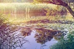 Типичное европейское заболоченное место и болотистая область северная Италия стоковое изображение