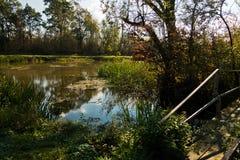 Типичный ландшафт на зоне болота bara Carska, большой естественной среды обитания для птиц и других животных Стоковое фото RF