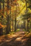 Типичный голландский ландшафт леса в осени с мягким солнечным светом в красивом месте страны Amelisweerd около en Bunnik Utrecht  Стоковые Изображения