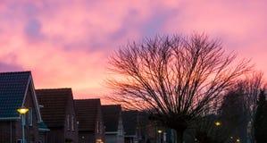 Типичный голландский район с домами и дерево, розовые nacreous облака крася небо стоковое изображение rf
