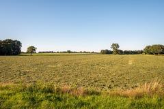 Типичный голландский ландшафт лета в июле около Delden Twente, Оверэйсела Стоковое Изображение RF