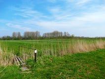 Типичный голландский ландшафт луга Стоковые Изображения RF