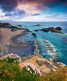 Типичный исландский seascape с зацветая розовыми цветками Стоковая Фотография RF