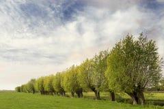 Типичный ландшафт голландца с зеленым лугом, травой, строкой верб и голубым небом с облаками Стоковое Фото