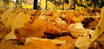Типичный октябрь Стоковые Фото