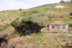 Типичный дом с drago Стоковая Фотография