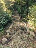 Типичный путь в древесинах Стоковые Изображения RF