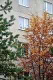Типичный русский двор в обычном районе, Zhukovsky, области Москвы, России, Европе стоковое изображение