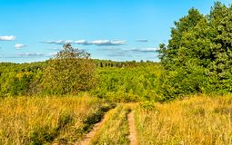 Типичный сельский ландшафт зоны Курска, России стоковое изображение