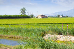 Типичный сельский ландшафт с полями риса Стоковая Фотография RF