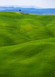 Типичный тосканский ландшафт - зеленые волны Стоковое фото RF