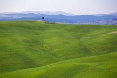 Типичный тосканский ландшафт - зеленые волны Стоковое Фото