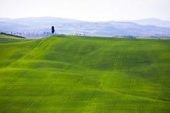 Типичный тосканский ландшафт - зеленые волны Стоковое Изображение RF