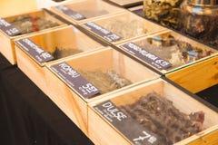 Типы водорослей Стоковое Фото