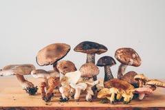 Типы гриба Стоковые Фотографии RF