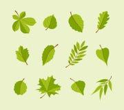 Типы листьев - установленных значков дизайна современного вектора плоских бесплатная иллюстрация