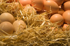 типы яичек Стоковое Изображение RF