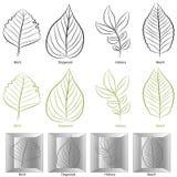 тип вала листьев установленный бесплатная иллюстрация