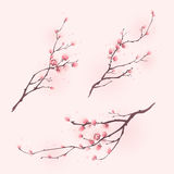 тип весны картины вишни цветения востоковедный иллюстрация штока