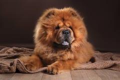 тип старой открытки grunge собаки конструкции чау-чау breed ретро стоковое фото