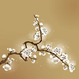 тип сливы картины цветения востоковедный иллюстрация штока