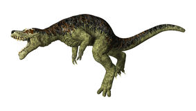 Тиранозавр Rex на белизне Стоковые Изображения