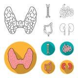 Тироидная железа, позвоночник, тонкая кишка, толстая кишка Человеческие органы установили значки собрания в плане, плоском вектор иллюстрация вектора