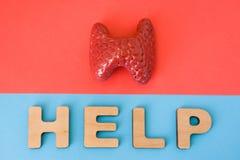 Тироидная железа с словом помощи Анатомическая модель тироидной железы на красной предпосылке, под письмами которые делают помощь Стоковое Изображение