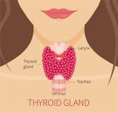 Тироидная железа женщины бесплатная иллюстрация