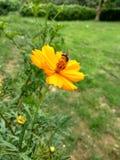 титр пчелы и цветка самый лучший всегда Стоковые Фотографии RF