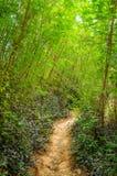 Тихая дорога дороги в лесе в горах Стоковые Изображения
