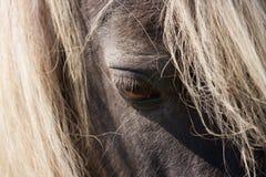 Тихая деталь глаза лошади Стоковая Фотография RF