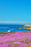 Тихая океан роща, Калифорния, Соединенные Штаты Америки, США Стоковые Фото