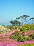 Тихая океан роща, Калифорния, Соединенные Штаты Америки, США стоковая фотография