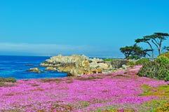 Тихая океан роща, Калифорния, Соединенные Штаты Америки, США Стоковая Фотография RF