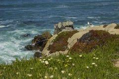 Тихая океан роща, побережье CA Стоковые Изображения RF