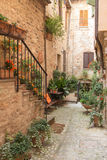 Тихая улица с цветками (Spello, Италией) Стоковая Фотография RF