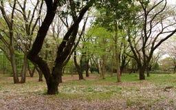 Тихие древесины Стоковое Изображение RF