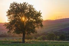 Тихий и мирный взгляд красивого большого зеленого дерева на заходе солнца gr Стоковое Изображение RF