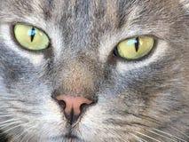 Тихий кот Стоковое Фото