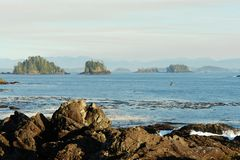 Тихий океан бечевник Стоковые Изображения RF