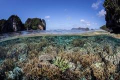 Тихий океан риф отмелый Стоковые Изображения
