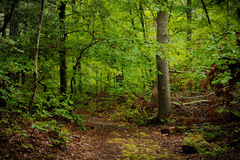 Путь древесин Стоковые Изображения RF