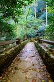 Тихий путь через древесины в горах Carolinas стоковые изображения